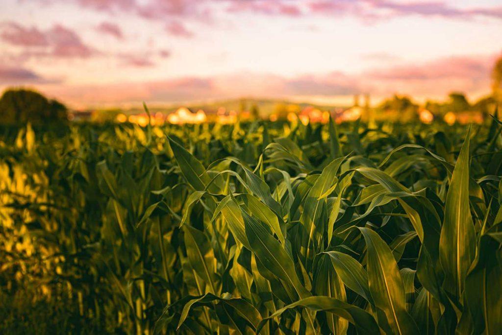 التأمين الزراعي