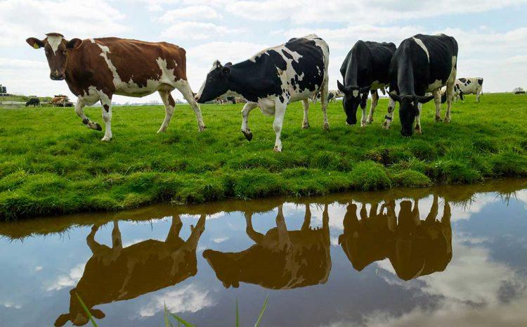 ملخص وثيقة نفوق الماشية